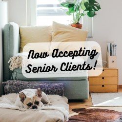 Now Accepting Senior Clients!